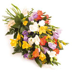 21 colorful freesias