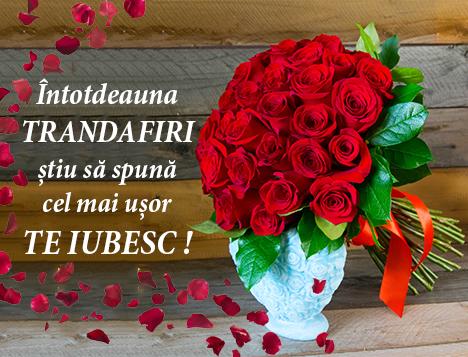 Florarie Online Cluj Napoca Flori Online Livrare Gratuita